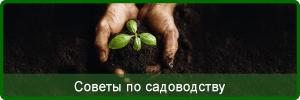 Gardening Tips in Paphos Cyprus